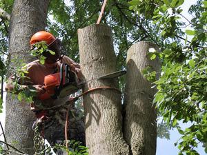 tree-surgeon